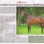 Bea sportpaard 1
