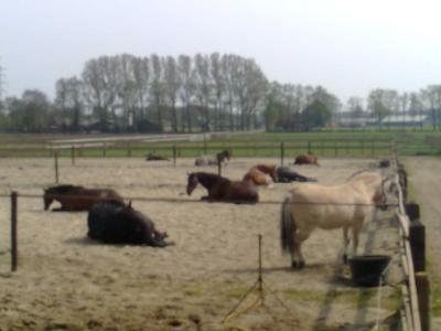 Slapende paarden